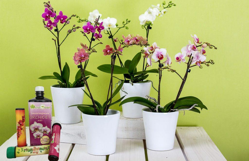 Hnojivá, ktoré sú vhodné pre orchideu