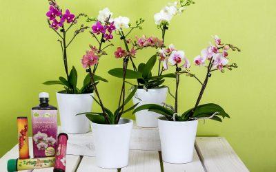Hnojivá pre orchidey
