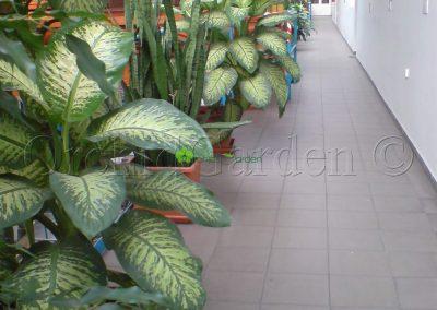 výzdoba interiérovými kvetmi