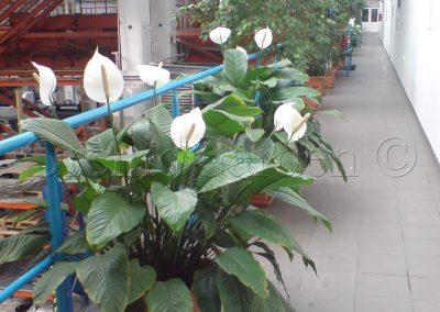 biele lopatkovce