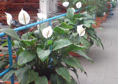 výzdoba kvetmi v interiéri