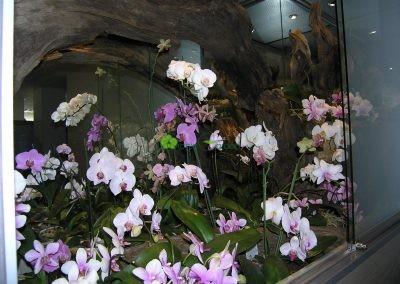 vitrína plná orchideí
