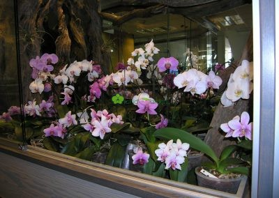 vitrína s orchideami