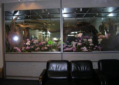 vitríny s orchideami