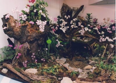 orchidey na výstave